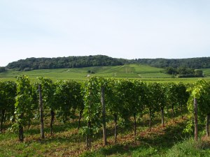 Luxembourgish vineyards